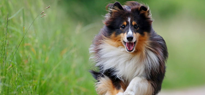 Hund, Lucky, rennen, laufen, Tierfotografie Freye, Hamburg